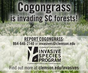 Clemson cogongrass