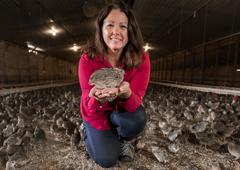 Manchester Farms quail
