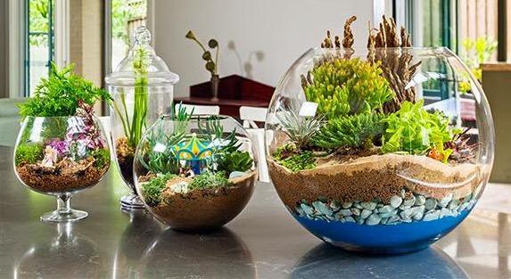 Plant night for Jardin miniature