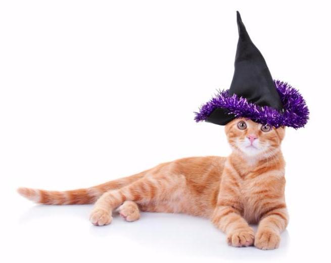 cat_witch_hat.jpg