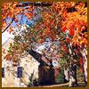 orange-tree-sm2.jpg