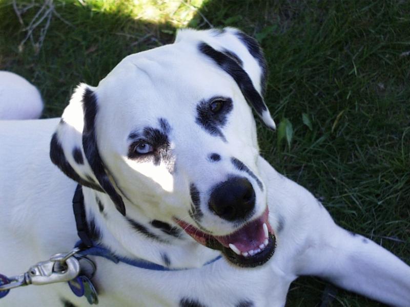 dog at Sonoma Vally dog park