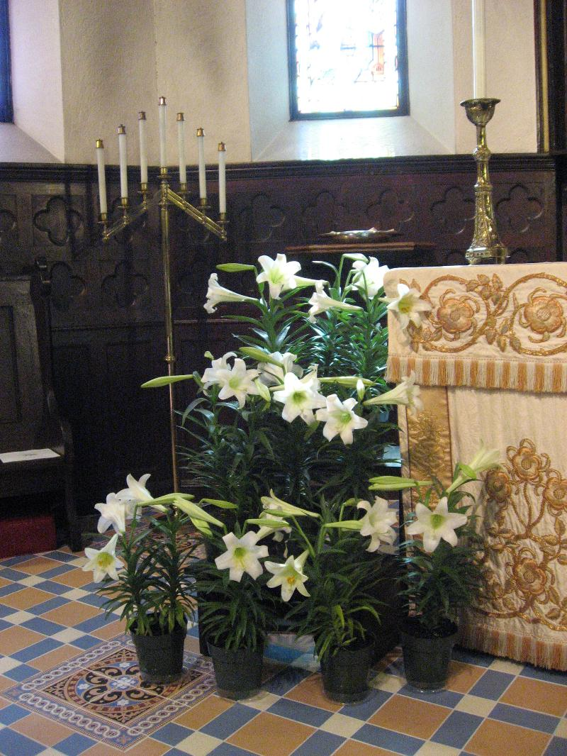 Lilies on Easter Sunday