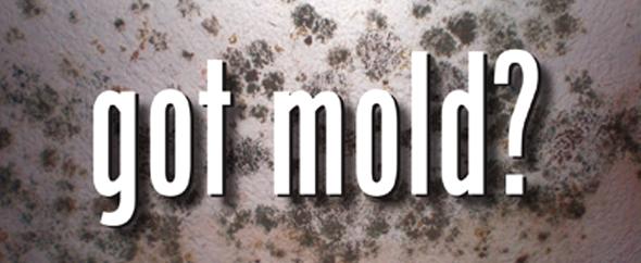 Got Mold_