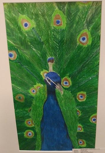 Peacock by Hadley VanDeventer, 10th Grade. Brunswick R-II
