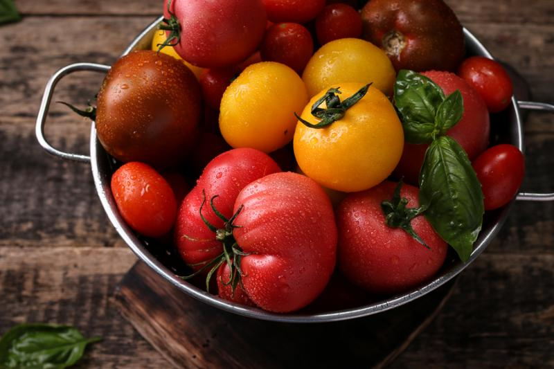 Red yellow and purple tomatoes of different sizes and shapes in a colander