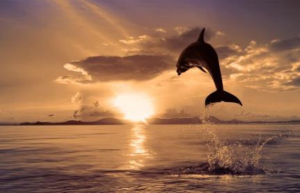 beach_cleanup_dolphin