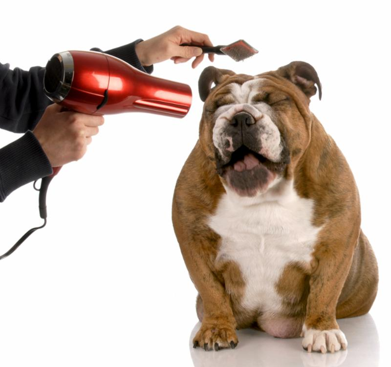 dog_grooming_sneezing.jpg
