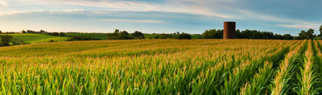 Missouri corn field