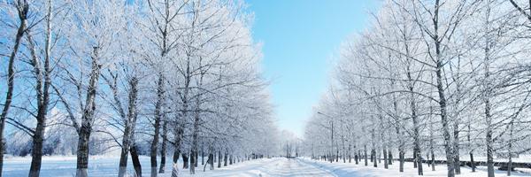 snowy wintry road