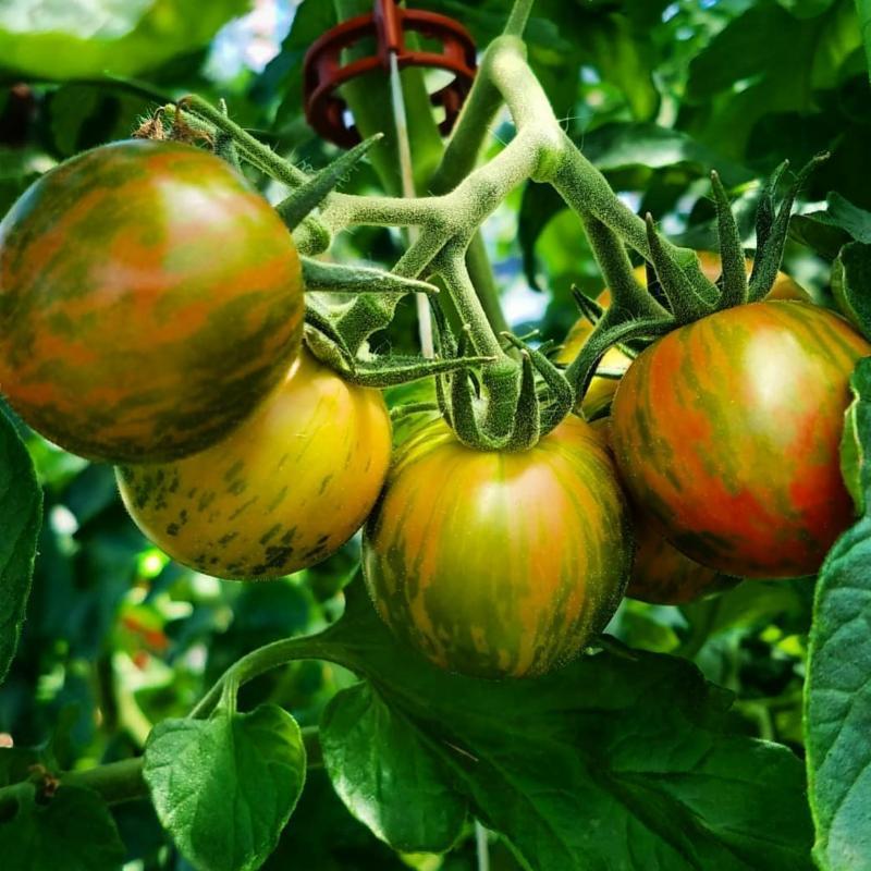 groundwork harvest