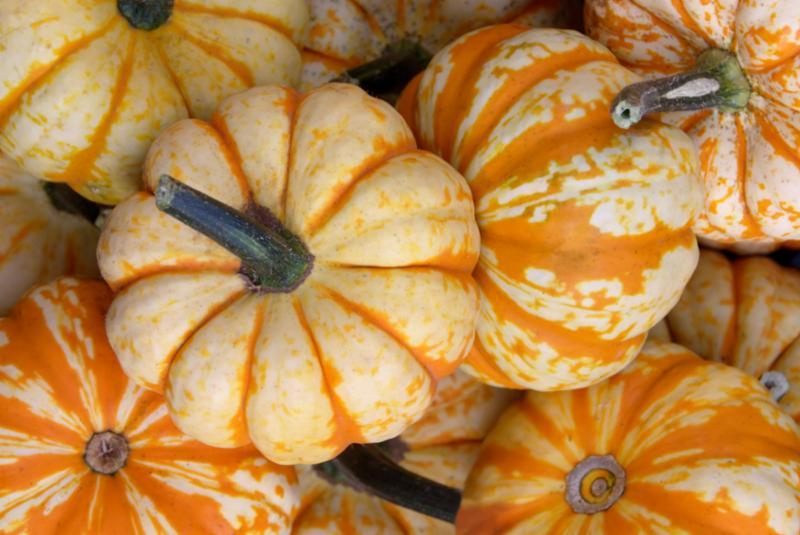 small_pumpkins.jpg
