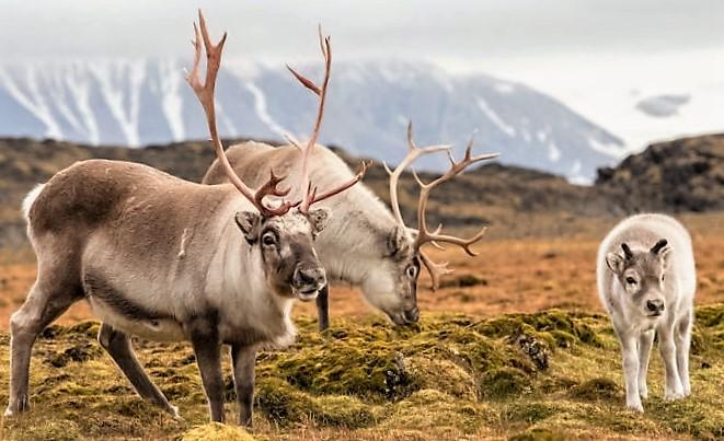reindeer_ jezebel.com