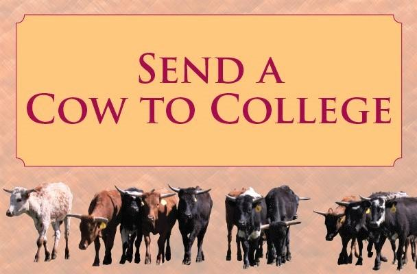 send cow to college_ coloradomesa.com