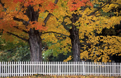autumn-trees-fence2.jpg