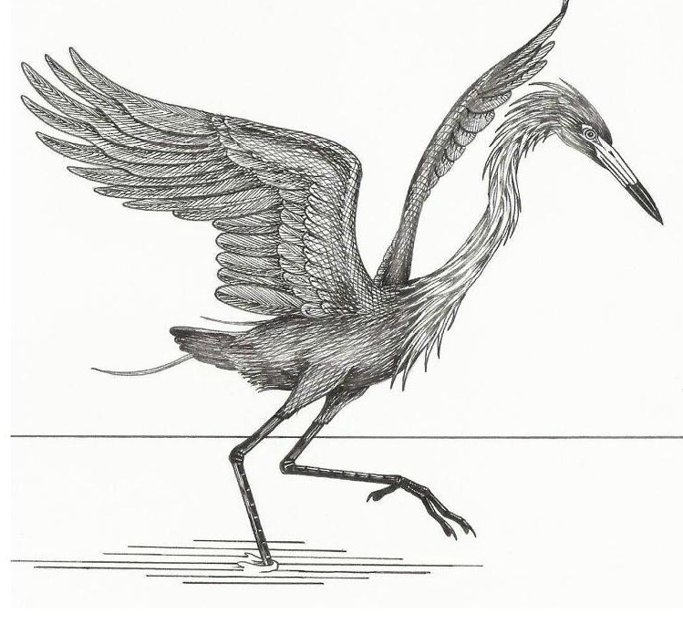 Reddish Egret Logo