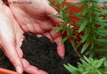 CYF garden hands in dirt