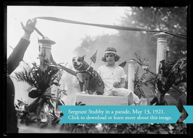 Sgt. Stubby in a parade. The small dog in a vest adorned with medals sits on a pedestal, presumably on a parade float, with a young girl.