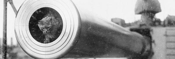 A cat peers out from the barrel of a large cannon.