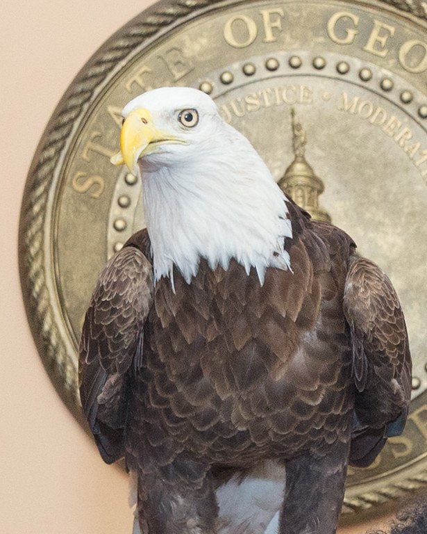 The Georgia Southern University Eagle visited the Capitol this week.