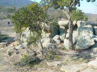 rocks-trees-196x147