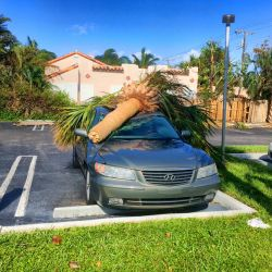 Palm V Car Irma