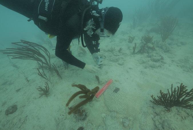 Diver Miami Coral Reef