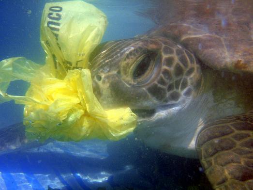 Sea Turtle Plastic Bag