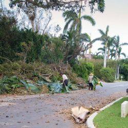 yard debris Irma