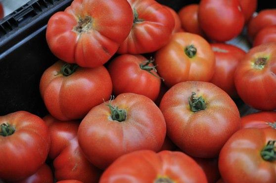 Tomato Field Grown
