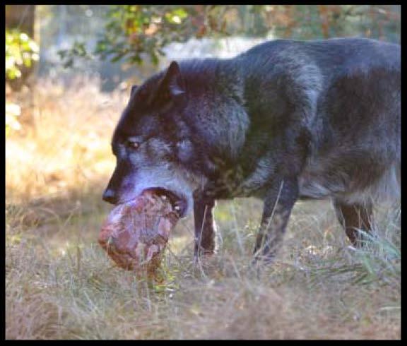 Caedus relishes his food.