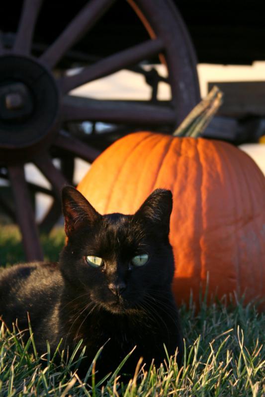 blackcat_halloween.jpg