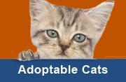 Adopt Cats