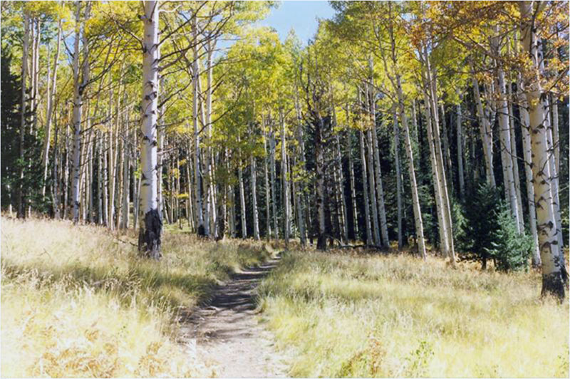 Kachina Trail
