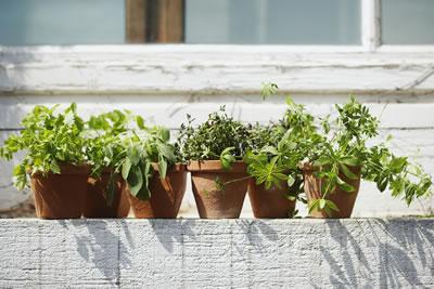 sunny-ledge-pots.jpg