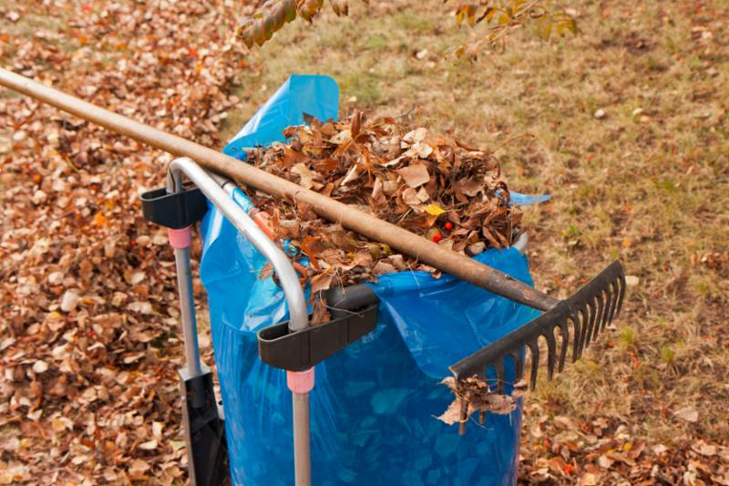 raking_leaves.jpg