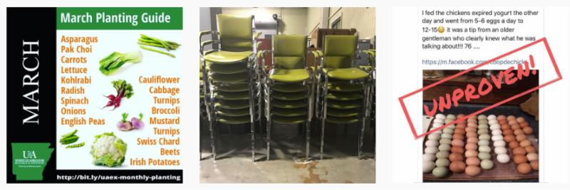 three images - march planting_ avocado chairs_ egg myth