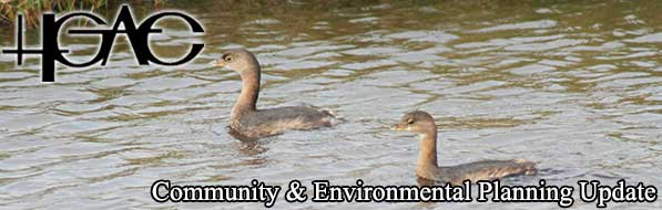 Pie-biled grebes at Anahuac National Wildlife Refuge.