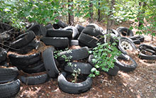 tires dumped in a wooded area