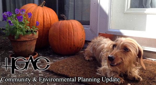 Dog beside pumpkins - October Newsletter Banner