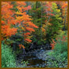 trees-square-sm.jpg