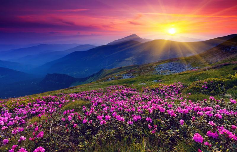 pink_meadows_flower.jpg