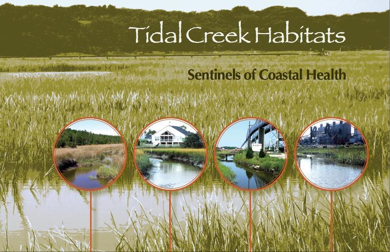 Tidal Creek Cover