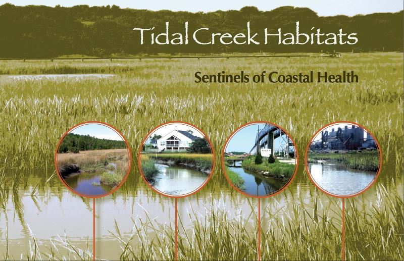 Tidal Creek Cover