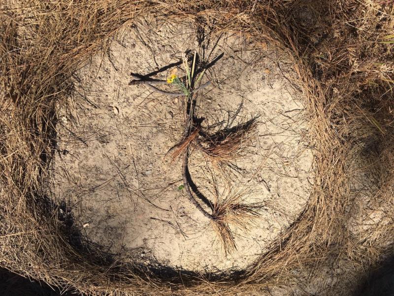 RadJoy bird on pine stump