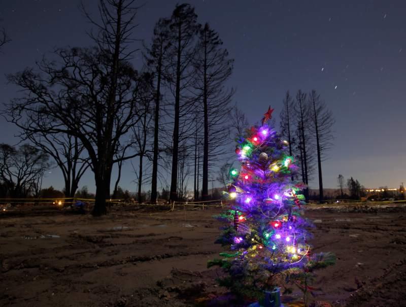 Christmas tree glowing on burned land