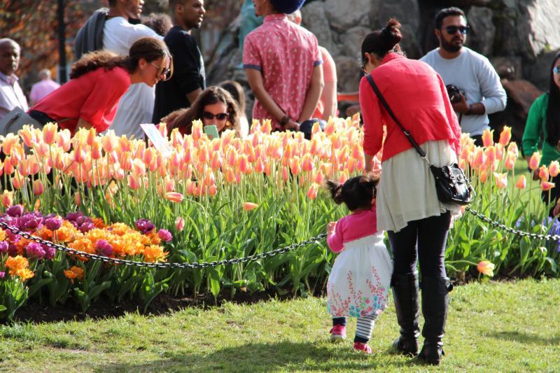 Tulip Festival in Albany, May 13-14, 2017