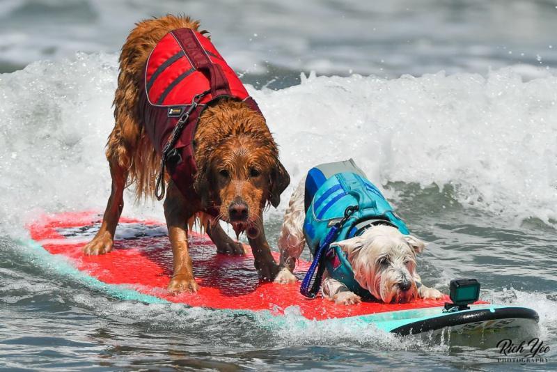 8-13-18 - Dog Surfing - Rich Yee