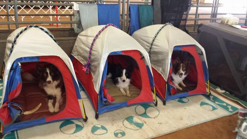a0002bc98287 Mighty Mite Dog Gear's Mighty Mite Super Set Dog Tents have earned acclaim  from dog sport world team members world wide as well as local competitors  and ...