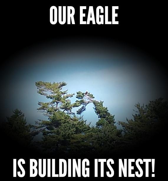 Bald Eagle Sept 2018